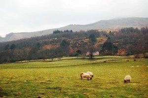 Rural-broadband-300x199